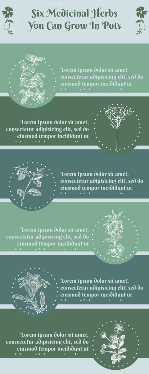 Infographic template: Six Medicinal Herbs You Can Grow In Pots Infographic (Created by InfoART's Infographic maker)