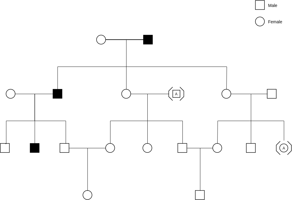 Pedigree Chart template: Pedigree Probability Example (Created by Diagrams's Pedigree Chart maker)