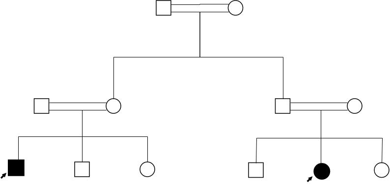 Pedigree Chart template: Autosomal Recessive Trait Pedigree Chart (Created by Diagrams's Pedigree Chart maker)