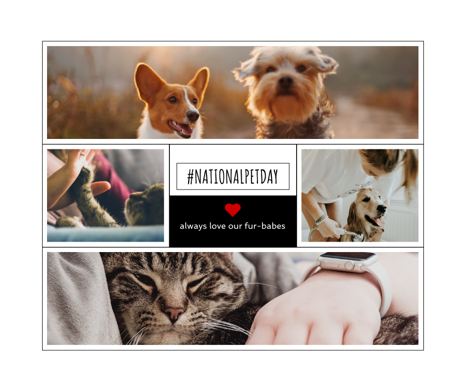 Facebook Post template: National Pet Day Facebook Post (Created by Collage's Facebook Post maker)