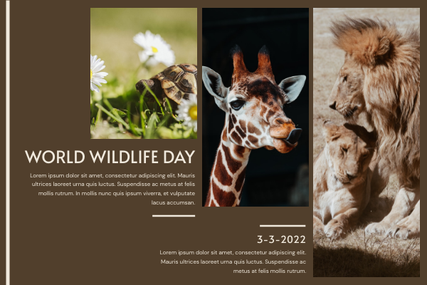 Greeting Card template: Brown Photo Grids World Wildlife Day Greeting Card (Created by InfoART's Greeting Card maker)