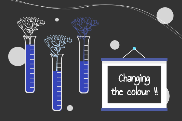 Laboratory template: Changing Colour Of Flowers (Created by InfoChart's Laboratory maker)