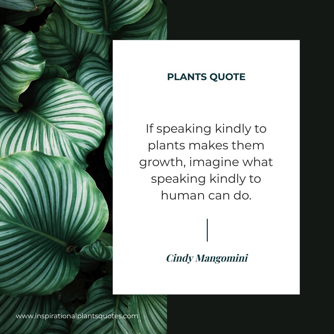 Instagram Post template: Plants Photo Plants Quote Instagram Post (Created by InfoART's Instagram Post maker)