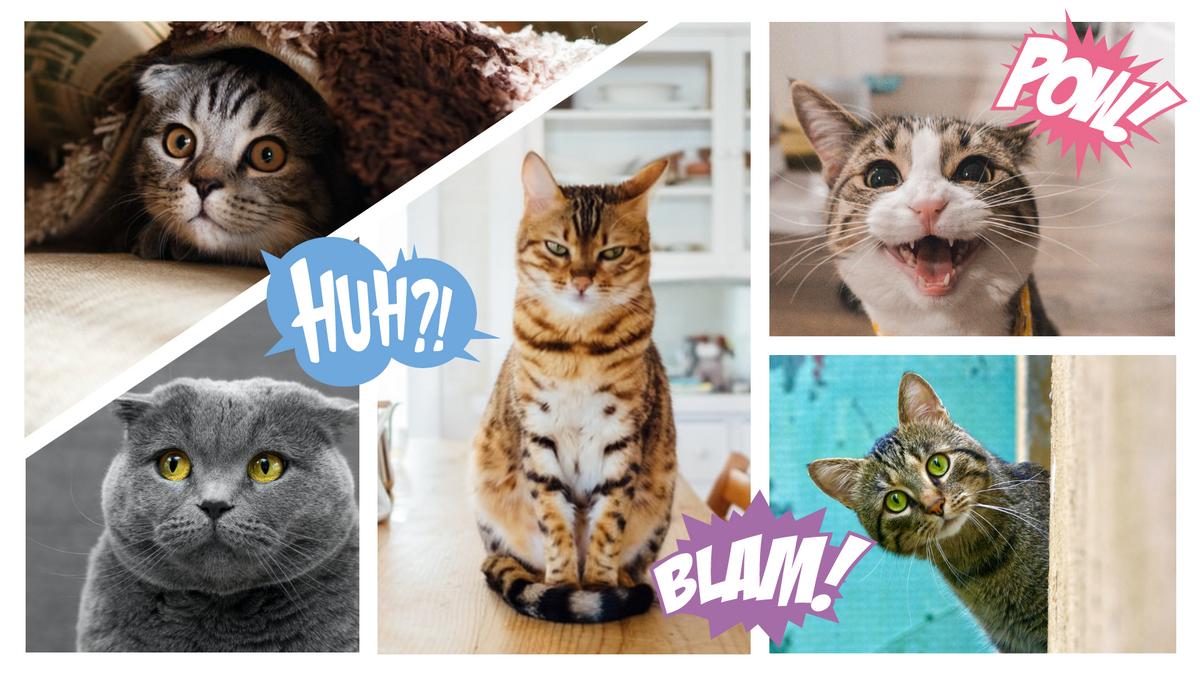 Comic Strip template: Cat Comic Strip (Created by Collage's Comic Strip maker)