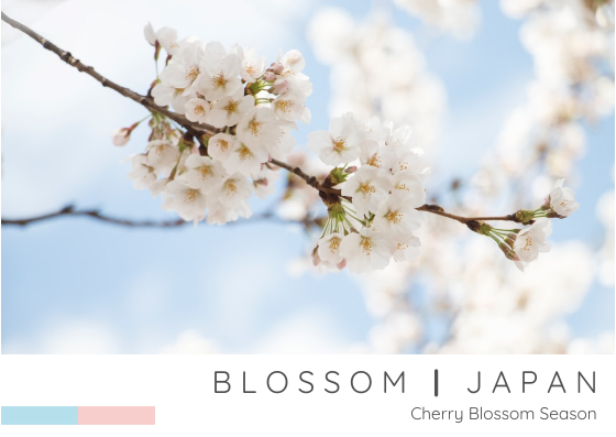 Post Card template: Blossom Japan Post Card (Created by InfoART's Post Card marker)