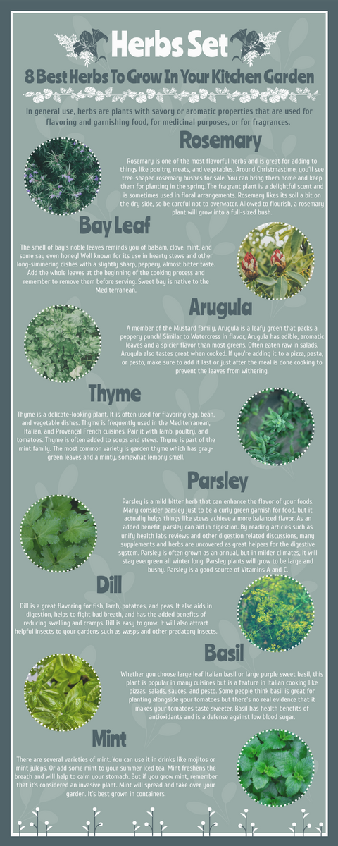 Infographic template: 8 Best Herbs To Grow At Home Infographic (Created by InfoART's Infographic maker)