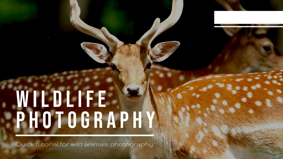 YouTube Thumbnail template: Wild Animals Photo Wildlife Photography YouTube Thumbnail (Created by InfoART's YouTube Thumbnail maker)