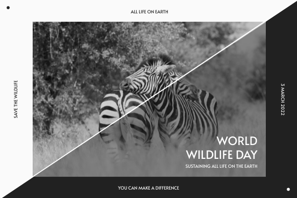 Greeting Card template: Black And White Zebra World Wildlife Day Greeting Card (Created by InfoART's Greeting Card maker)