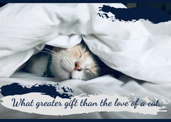 Postcard template: Cat Postcard (Created by InfoART's Postcard maker)