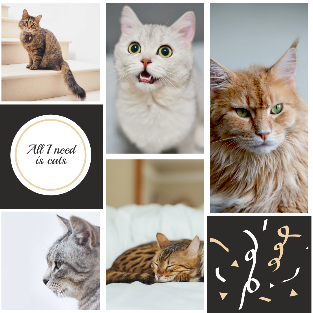 Photo Collage template: All I Need Is Cats Photo Collage (Created by Collage's Photo Collage maker)
