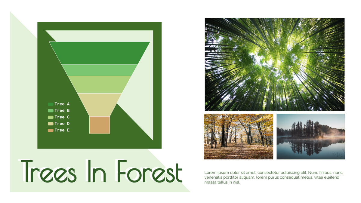 Funnel Chart template: Types Of Trees In Forest Funnel Chart (Created by Chart's Funnel Chart maker)