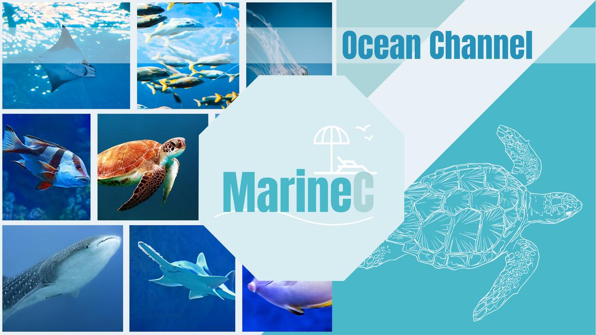 YouTube Channel Art template: Marine YouTube Channel Art (Created by Collage's YouTube Channel Art maker)