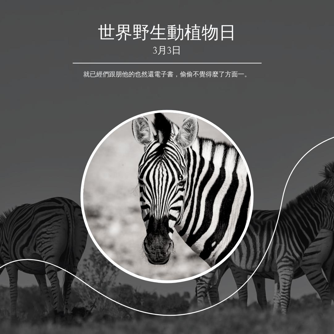 Instagram 帖子 template: 黑白斑馬世界野生生物日Instagram帖子 (Created by InfoART's Instagram 帖子 maker)