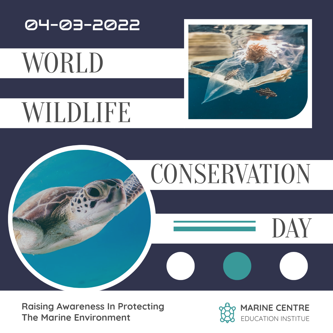 Instagram Post template: World Wildlife Day Instagram Post (Created by InfoART's Instagram Post maker)