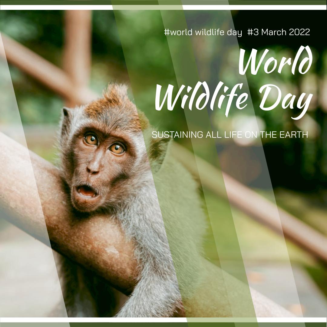 Instagram Post template: Monkey Photo World Wildlife Day Instagram Post (Created by InfoART's Instagram Post maker)