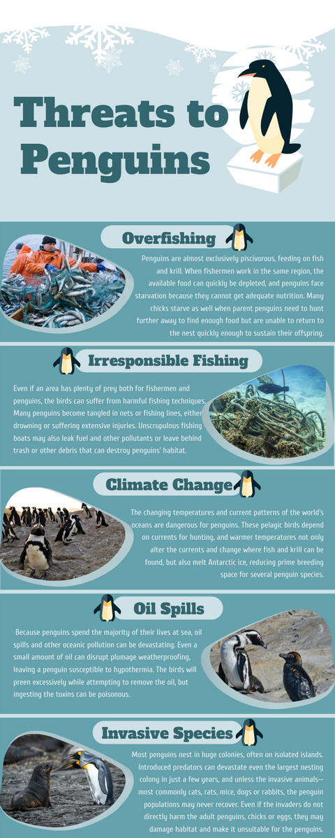 Infographic template: Threats to Penguins Infographic (Created by InfoART's Infographic maker)