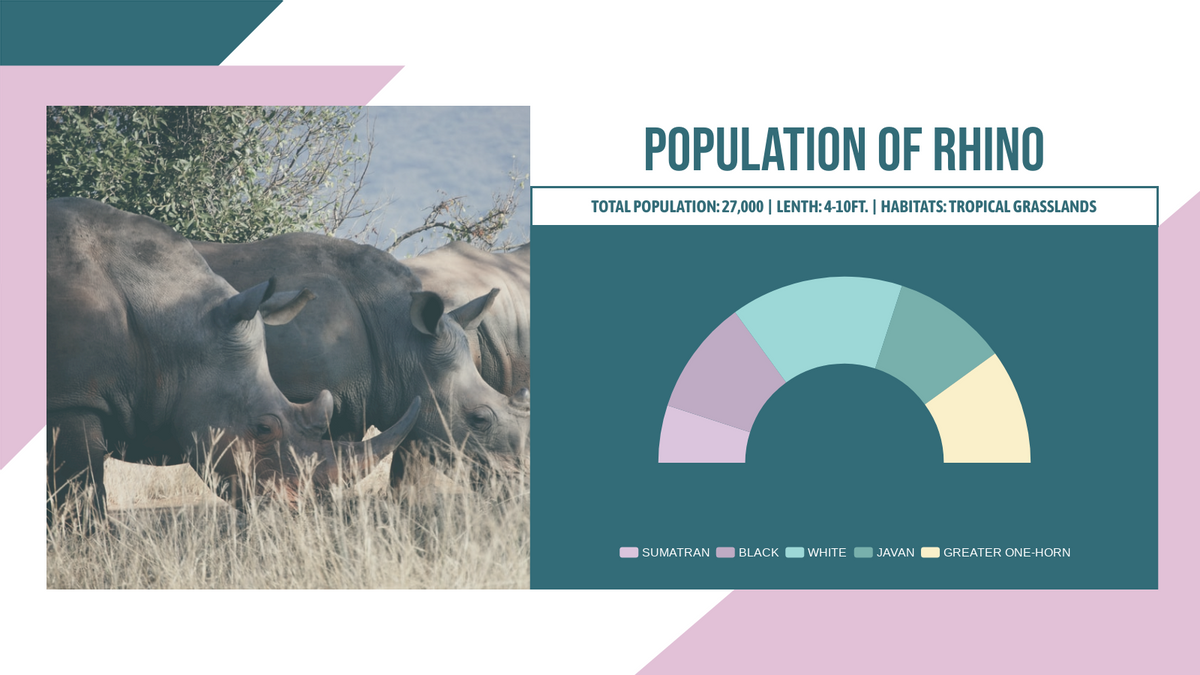Semi Doughnut Chart template: Rhino Population Semi-Doughnut Chart (Created by Chart's Semi Doughnut Chart maker)