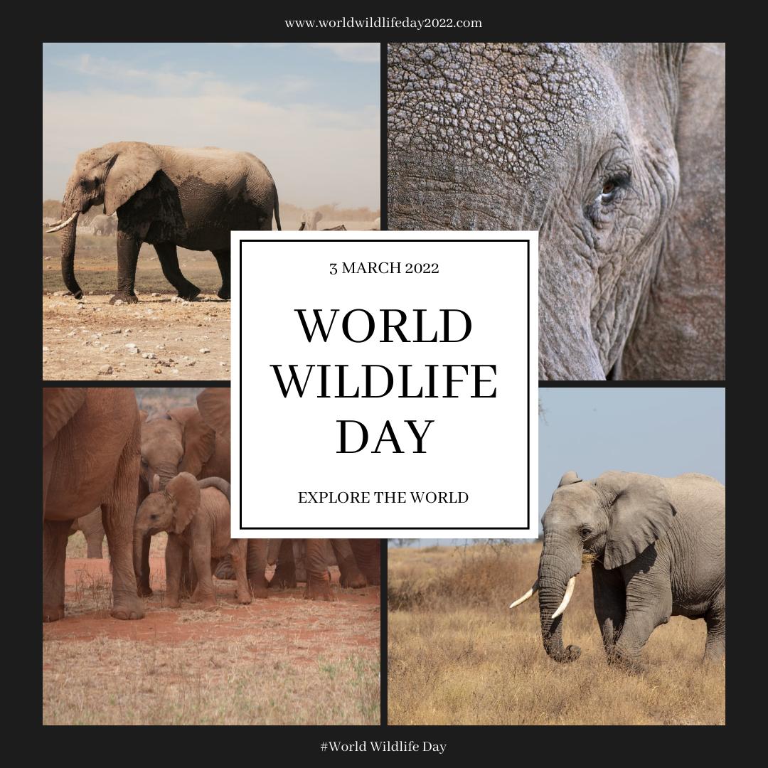 Instagram Post template: Elephant Photo Grid World Wildlife Day Instagram Post (Created by InfoART's Instagram Post maker)