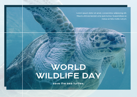 Postcard template: Blue Sea Turtle Photo World Wildlife Day Post Card (Created by InfoART's Postcard maker)