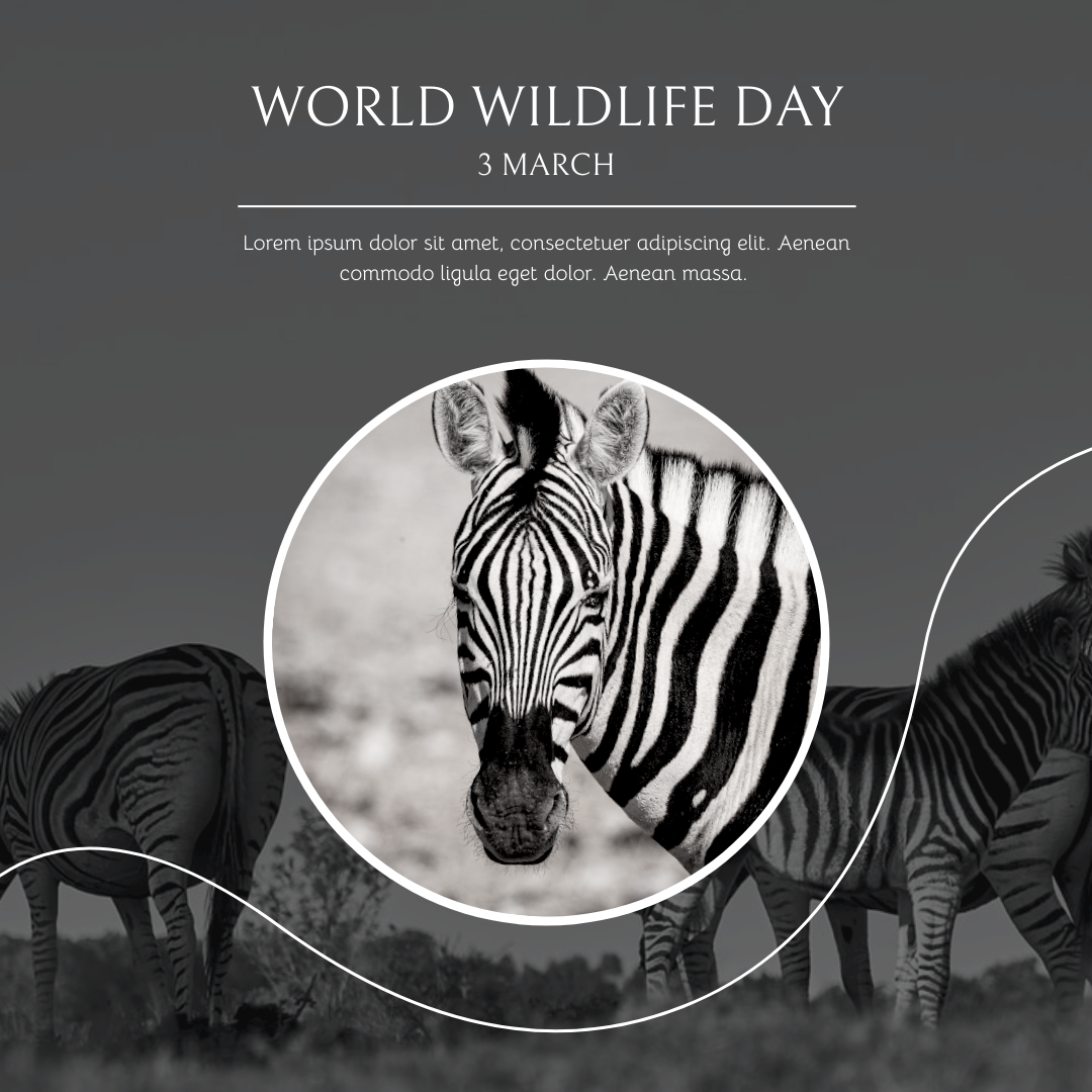 Instagram Post template: Black And White Zebra World Wildlife Day Instagram Post (Created by InfoART's Instagram Post maker)