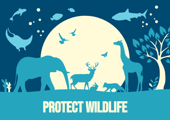 Postcard template: Blue and Yellow Illustration Protect Wildlife Postcard (Created by InfoART's Postcard maker)