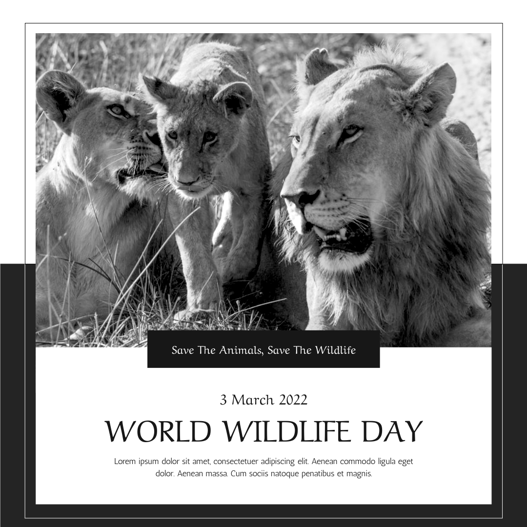 Instagram Post template: Black And White Lion World Wildlife Day Instagram Post (Created by InfoART's Instagram Post maker)