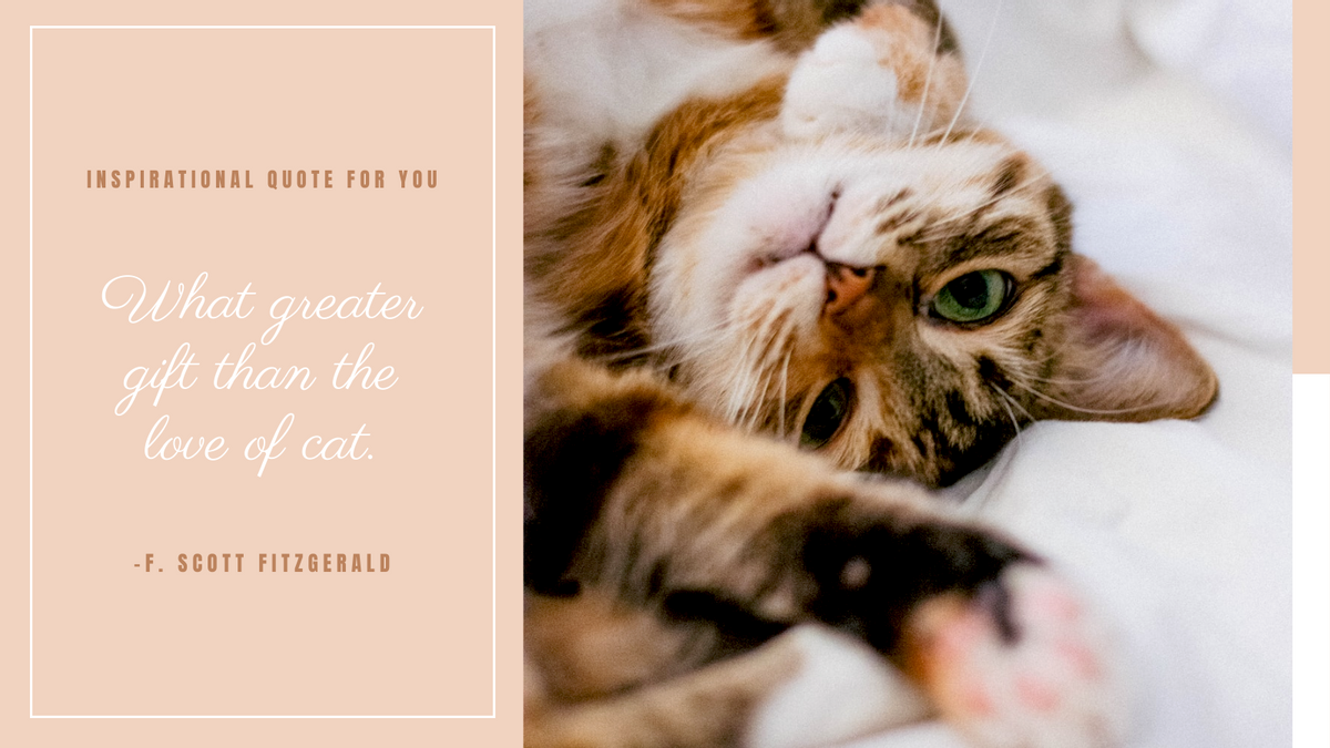 Twitter Post template: Inspirational Quote For Cats Twitter Post (Created by InfoART's Twitter Post maker)