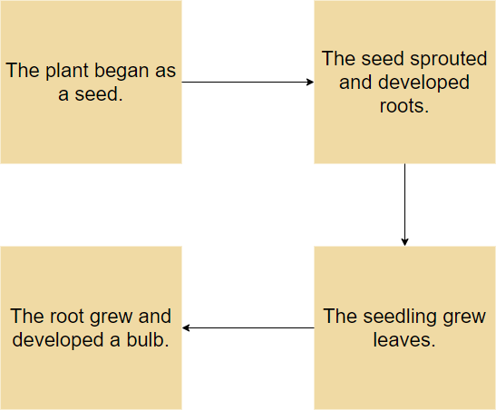 Plant growth flow map example