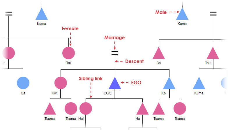 Kinship diagram example